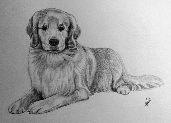 PET PORTRAIT - pencil drawn portrait on illustration paper